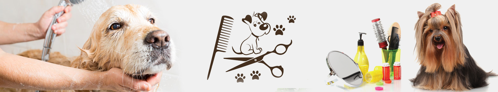 pet grooming in bangalore pet clinic in bangalore v
